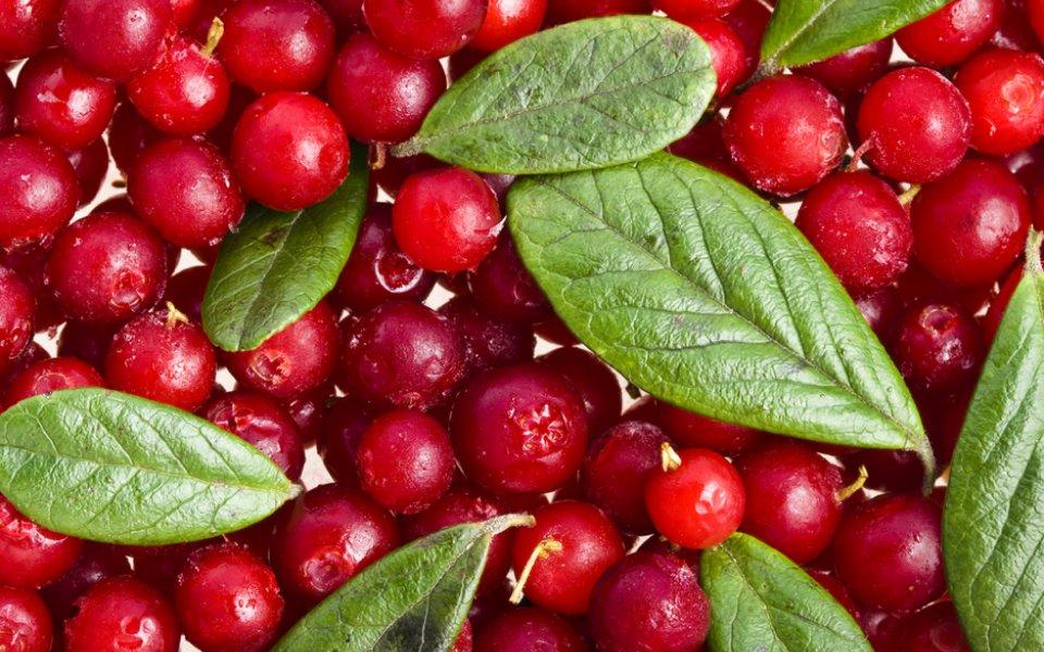 ΚΡΑΝΜΠΕΡΙ (cranberry)